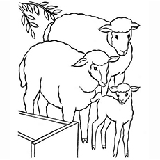 230x230 Top Free Printable Sheep Coloring Pages Online