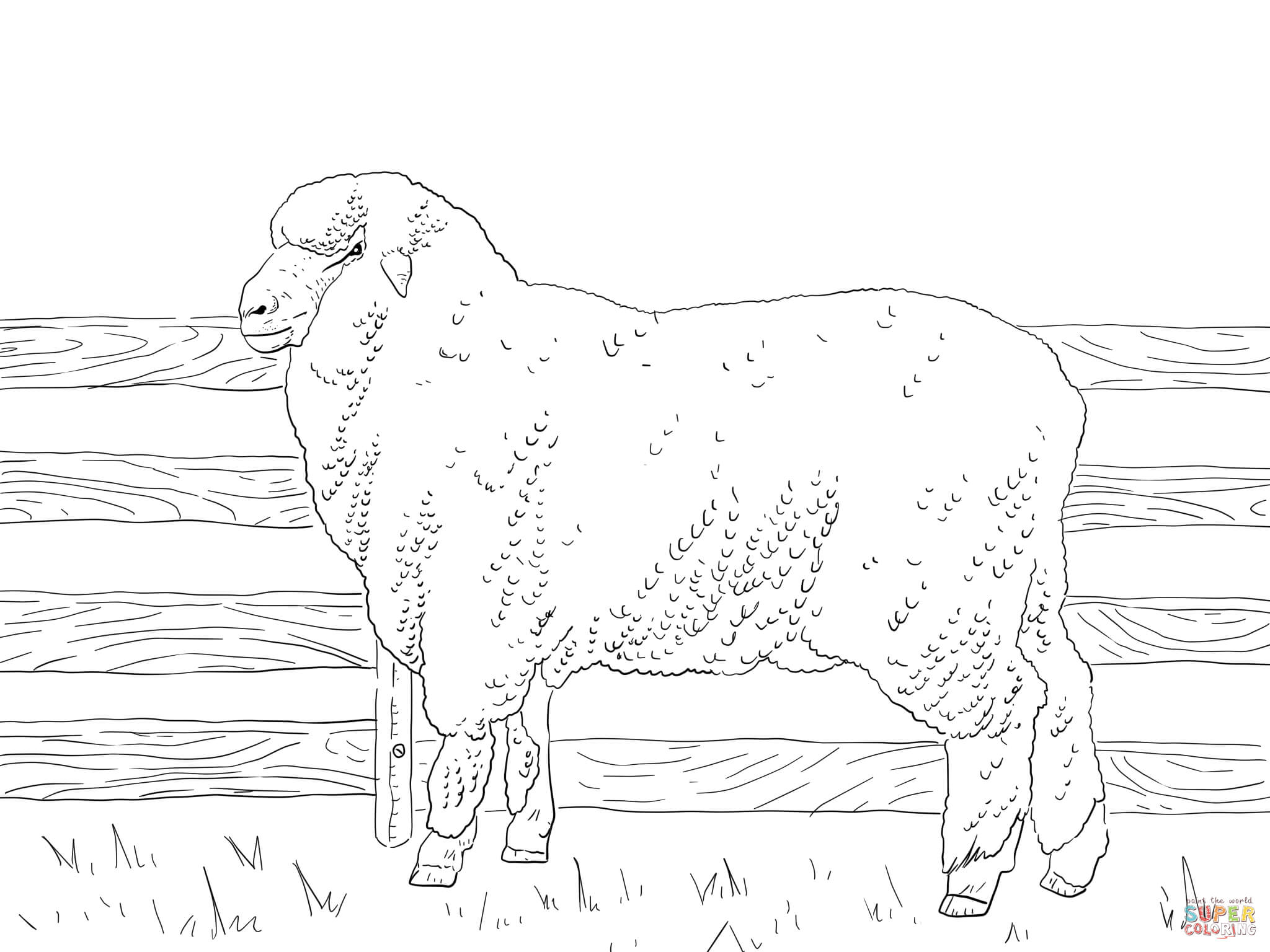 2048x1536 Coloring Page Of A Sheep