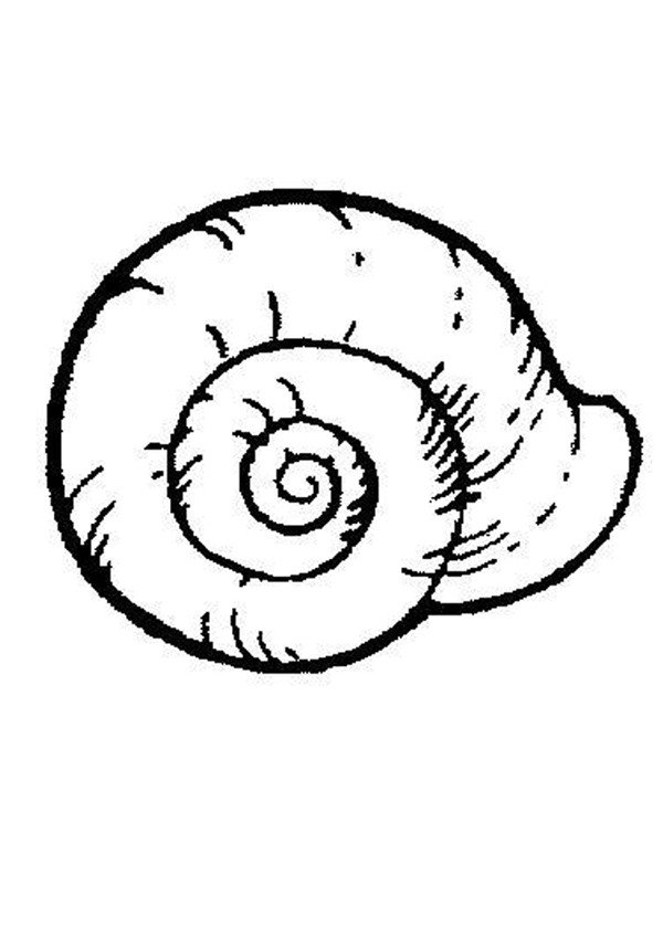 600x849 Shell Coloring Pages