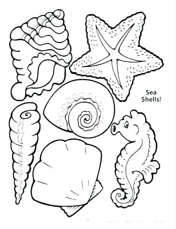364x473 Sea Shell Coloring Page Seashell Coloring Page Sea Shell Pages
