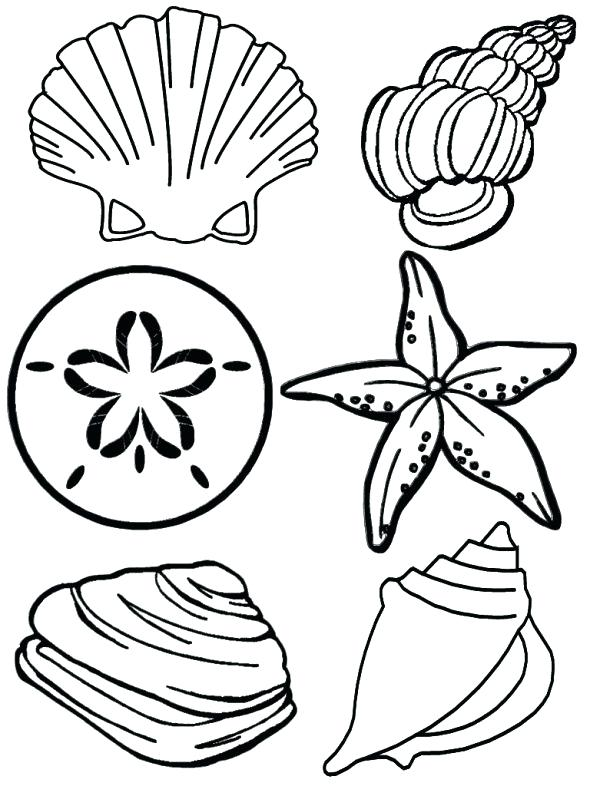 590x786 Sea Shell Coloring Pages
