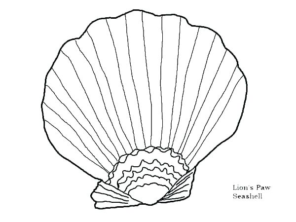 600x450 Seashell Coloring Pages Sea Shells Coloring Pages Seashell