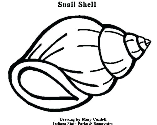 500x400 Shell Coloring Pages Breadcrumbs Shell Coloring Pages Printable