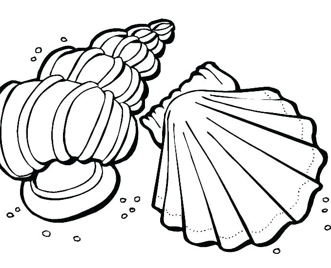 678x550 Shell Coloring Pages Sea Shells Coloring Pages Sea Shells Coloring