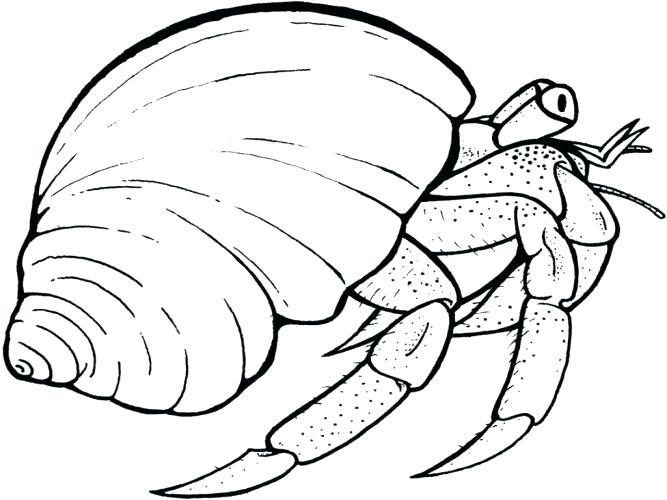667x500 Hermit Crab Coloring Page Coloring Page Hermit Crab Coloring Page