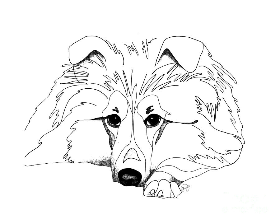 900x720 Shetland Sheepdog Coloring Pages Sheltie Love Drawing