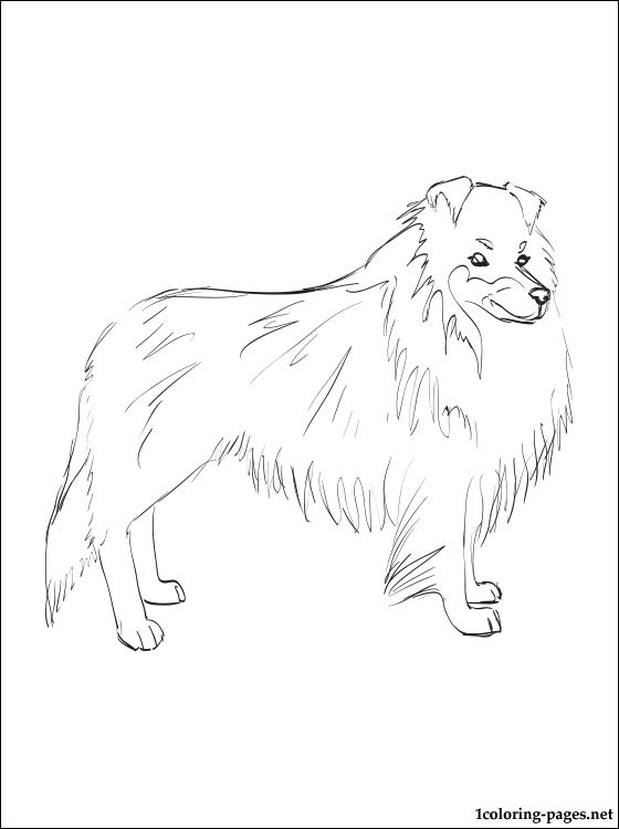 560x750 Shetland Sheepdog Coloring Page Coloring Pages