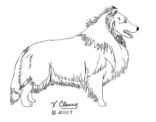 600x469 Sheltie Coloring Pages