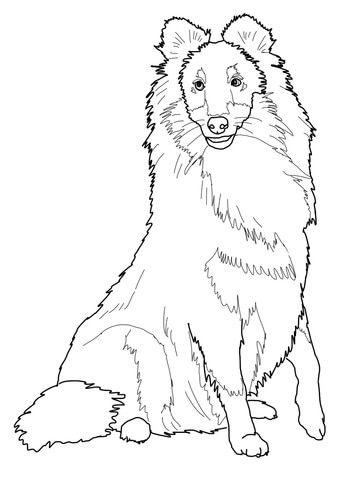 360x480 Sheltie Shetland Sheepdog Coloring Page Sheltir