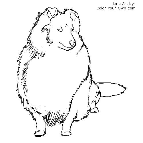 500x500 Shetland Sheepdog Coloring Page