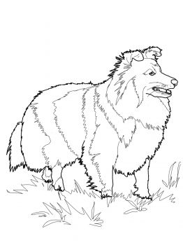Shiba Inu Coloring Pages