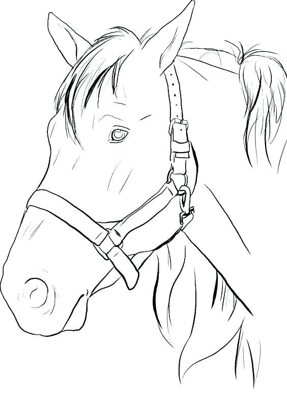 564x776 Horse Jumping Coloring Pages Se Jumping Coloring Pages Printable