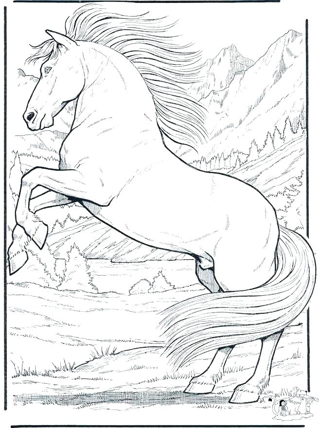 660x880 Horse Jumping Coloring Pages