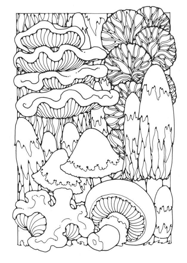 627x880 Best Mushrooms Images On Fungi, Mushrooms