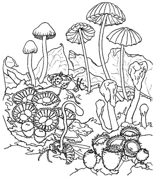 539x609 Mushrooms Mushroom Coloring Pages Coloring Pages