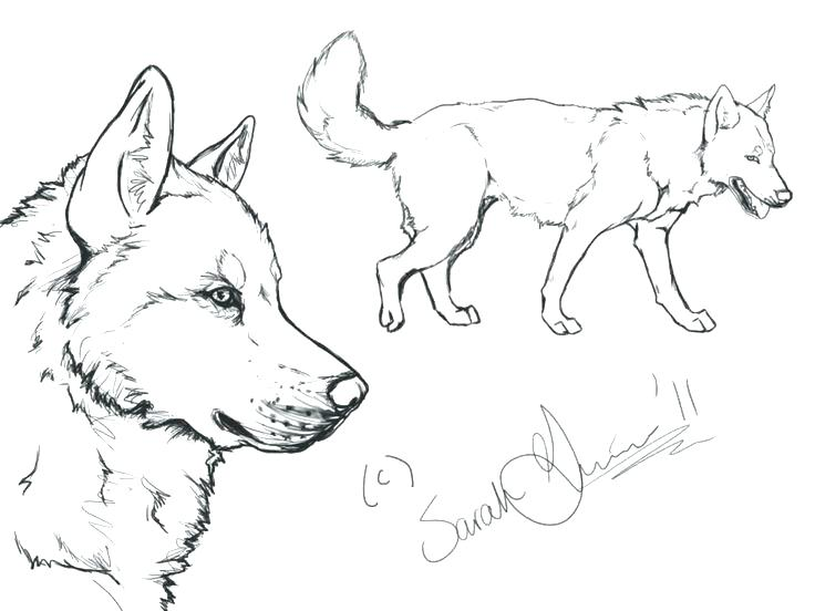 736x552 Siberian Husky Coloring Pages Husky Coloring Pages Husky