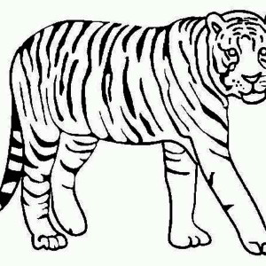 300x300 A Tiger Crawling From Its Nest Coloring Page