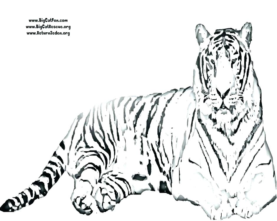 image about Tiger Printable known as Siberian Tiger Coloring Website page at  No cost for