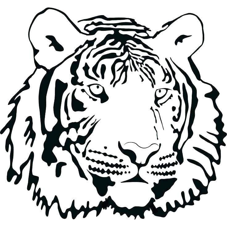 736x736 Tiger Coloring Pages White Page White Tiger Colouring Pages White