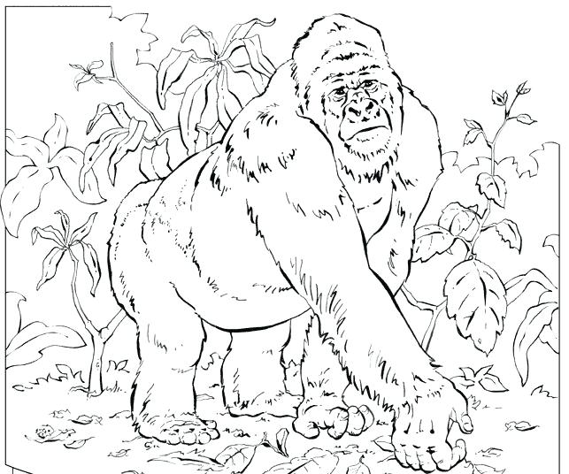 643x536 Gorilla Coloring Pages Gorilla Coloring Page Gorilla Coloring