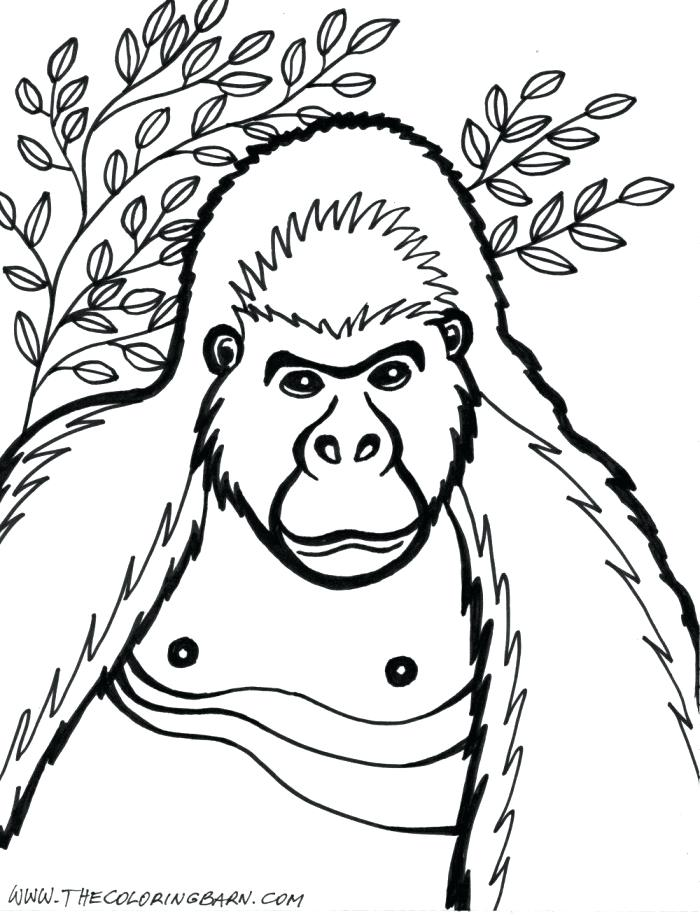 700x915 Gorilla Coloring Pages Gorilla Coloring Pages To Print Funny