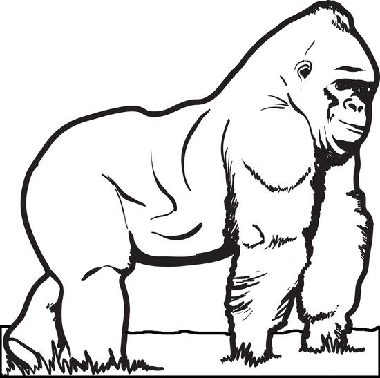 550x547 Gorilla Coloring Pages Unique Free Printable Gorilla Coloring Page