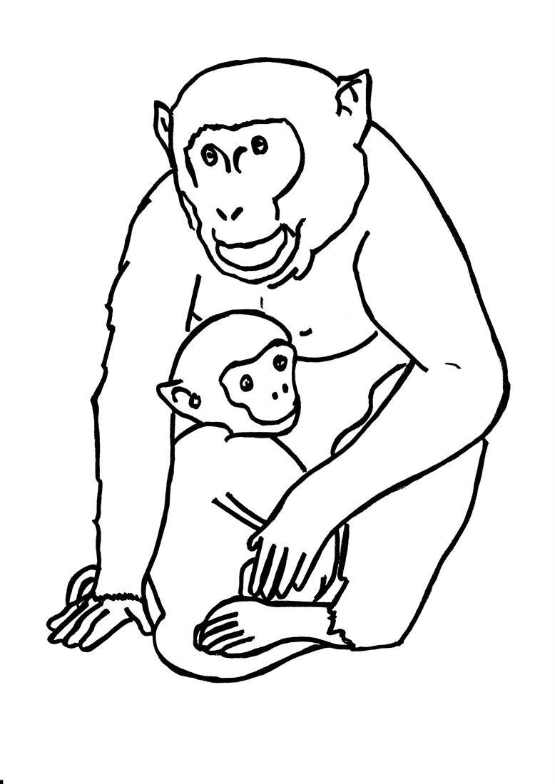 778x1100 Gorillas Coloring Pages Gorilla Page Adult