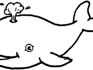 320x240 Simple Animal Coloring Pages Coloring Pages Pictures And Coloring