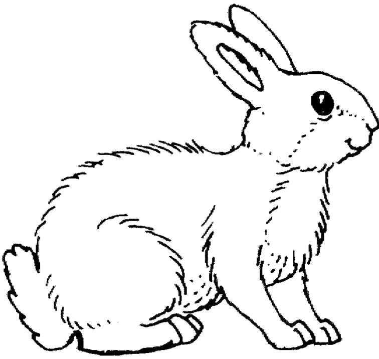 756x716 Promising Coloring Pictures Of Bunnies Baby Rabbit Pages