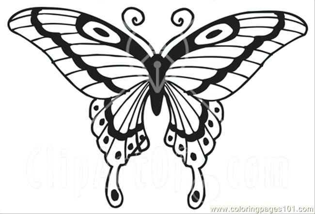 650x442 E Swallowtail Butterfly Coloring Page Free Butterfly E Swallowtail