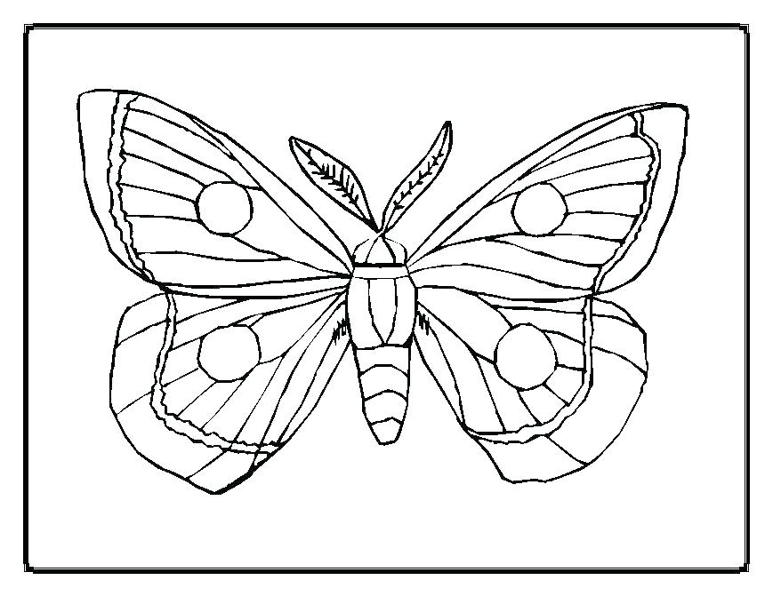 869x671 E Swallowtail Butterfly Coloring Page Free Pages Simple