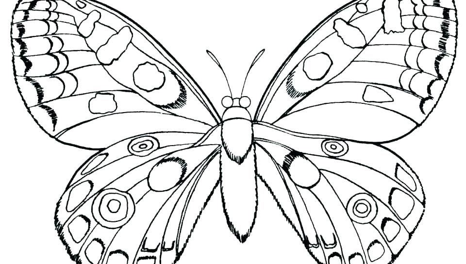 960x544 Free Printable Butterfly Coloring Pages Coloring Pages Butterflies