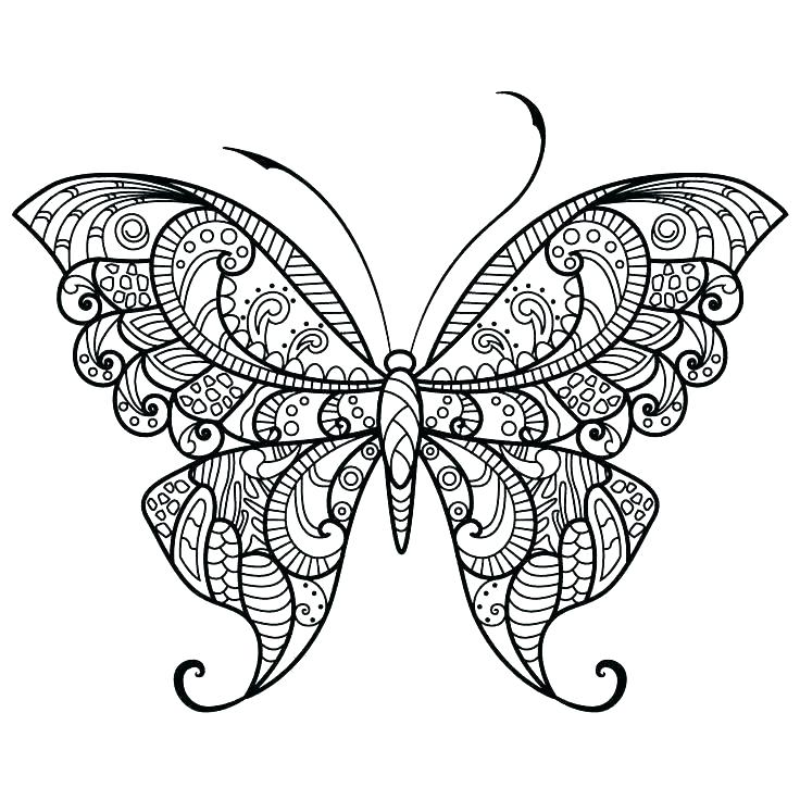 736x736 Printable Butterfly Coloring Page Butterfly Coloring Page