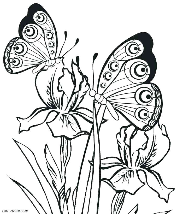 678x820 Butterfly Color Pages