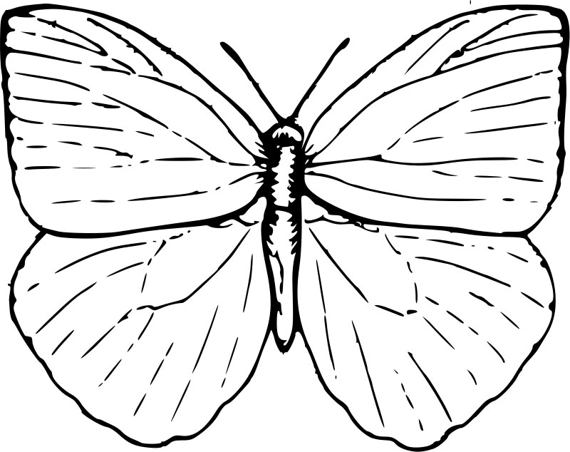 800x634 Butterfly Coloring Pages Free To Download