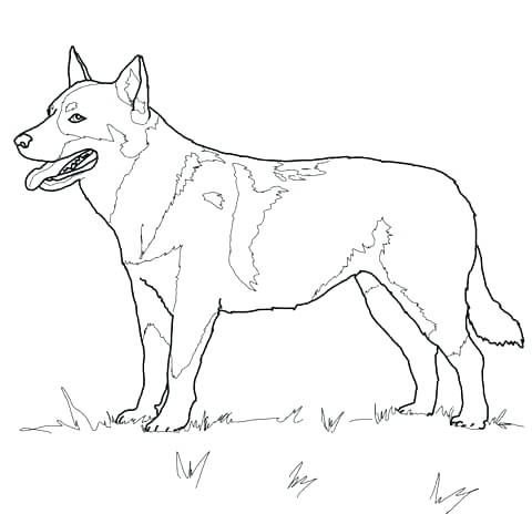 480x464 Dog Coloring Pages That You Can Print Dog To Color Simple Dog