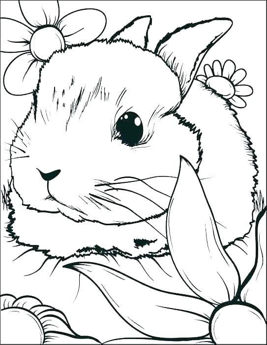 543x700 Easter Bunny Coloring Pages Free Printable Bunnies Coloring Pages
