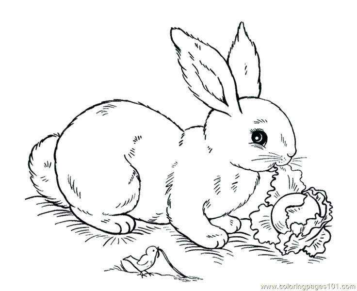 736x600 Colouring Easter Bunny Pictures
