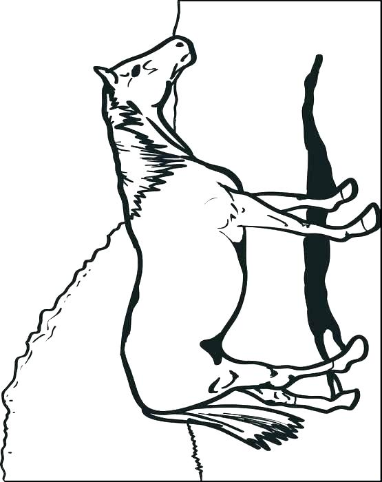 555x700 Horse Head Coloring Page Simple Horse Coloring Pages Horse Head