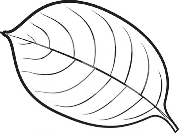 Simple Leaf Coloring Pages