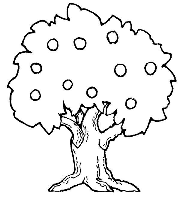 600x666 Attractive Design Apple Tree Coloring Page Pages Barriee