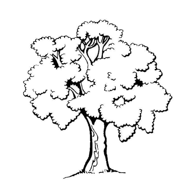 760x760 Trees To Print For Free Trees