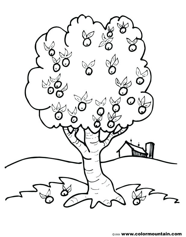 618x787 Beautiful Bare Tree Coloring Page Or Bare Tree Outline Coloring