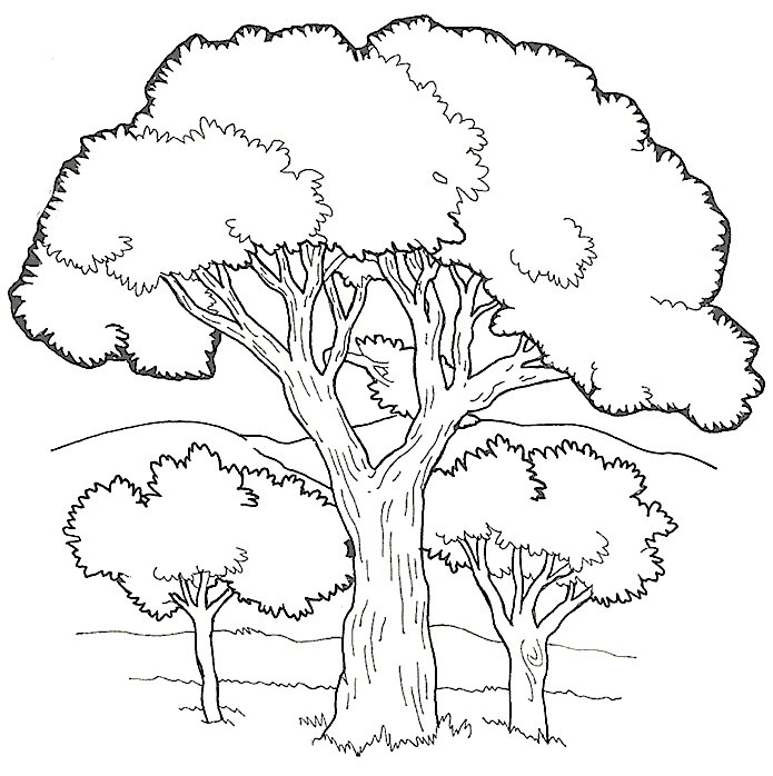 695x698 Best Tree Coloring Pages Marvelous Coloring Pages Of Trees
