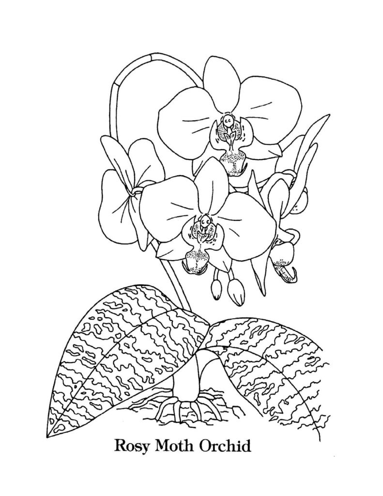 Singapore Coloring Pages