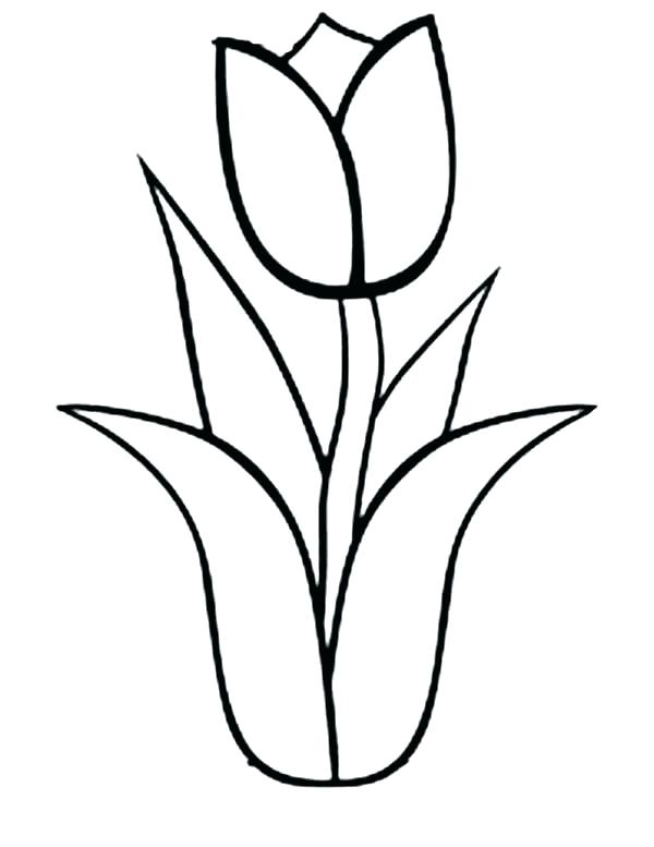 600x777 Free Single Flower Coloring Pages Tulips Page Tulip Nature