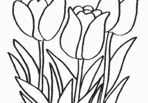 300x210 Latest Lotus Flower Coloring Pages Free Flower Coloring Pages