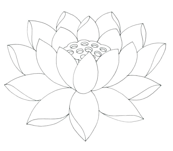 728x636 Lotus Flower Coloring Page Easy Flower Coloring Pages Easy Flower