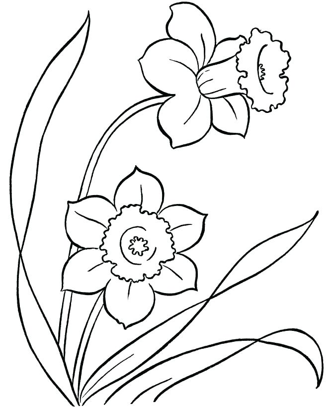 670x820 Small Flower Coloring Pages Vintage Flower Tulips An Illustration