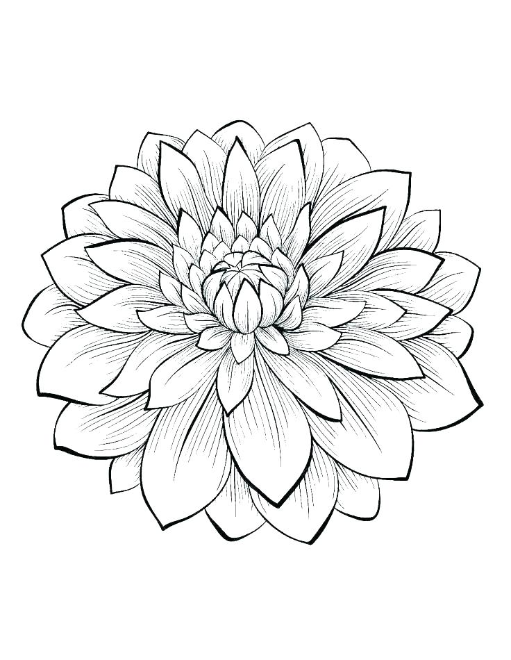 736x950 Coloring Pages Flowers Printable